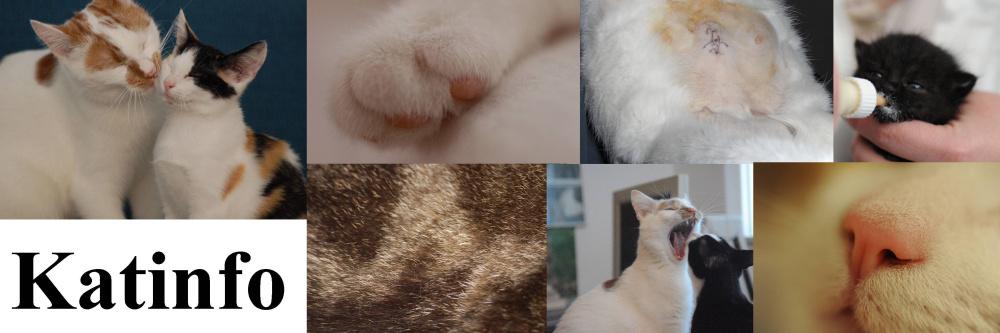 Dierendatabase  Katten  Gratis kittens  Dierenasiel